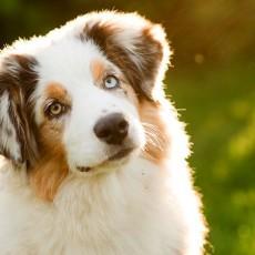 Les chiens de la ville de Béziers confondus par leur ADN: nouvelle idée de Ménard pour lutter contre les déjections canines